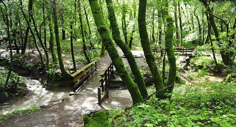 Wooded mossy green area with a bridge`