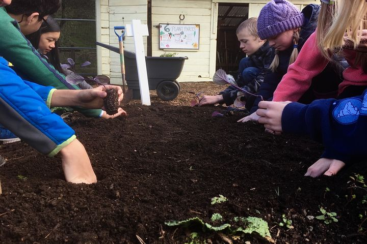Children Planting in a Garden Bed