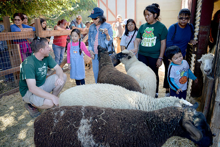 Tour Guide Speaking to Group in Sheep Pen