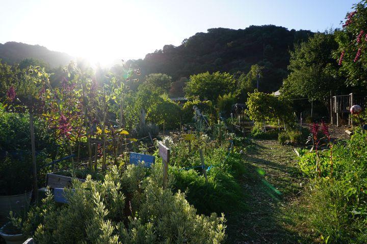 Garden with Sun Rays