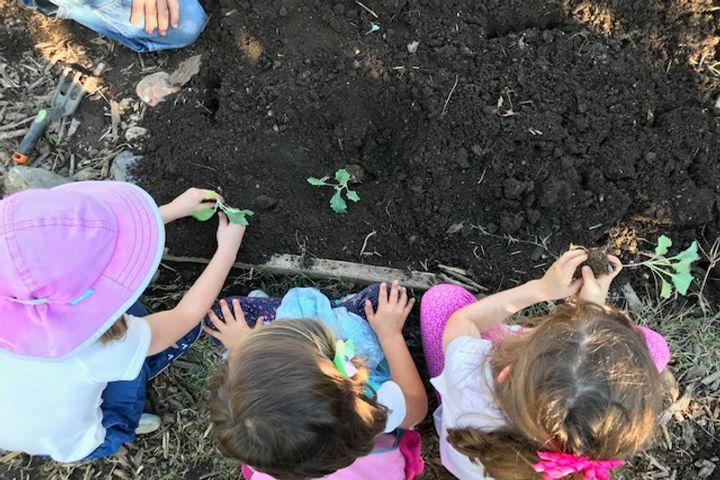 Kids Planting in Garden Bed