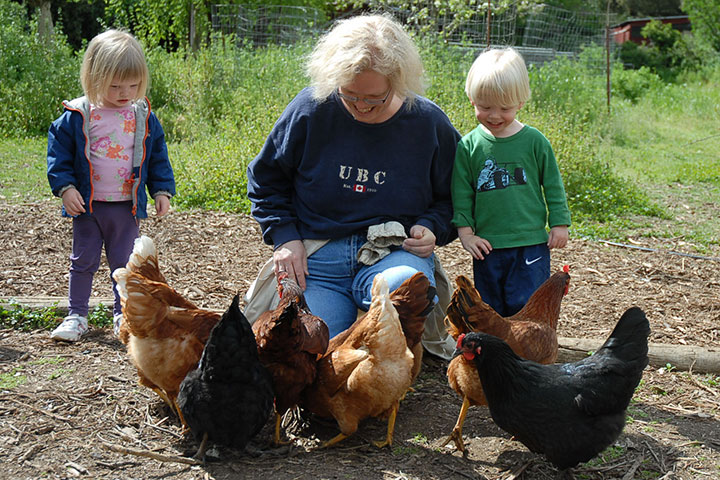 Child and Parent Feeding Chickens