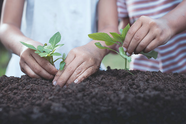 Child Hands Planting in Soil