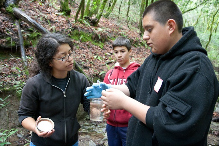 Students looking at water samples by the creek