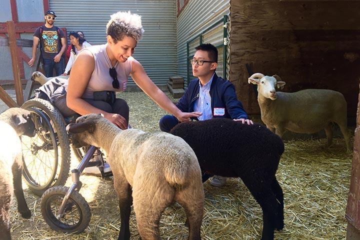 Students petting sheep