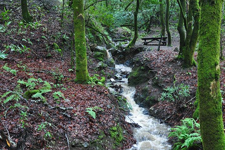 Rushing Adobe Creek